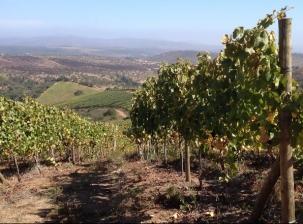 Route des vins de Casablanca (journée entière)